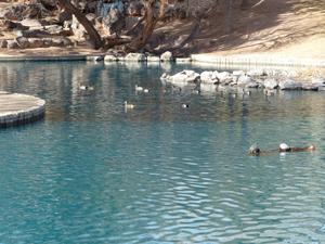 UNM Duck Pond