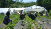 UNM's Sustainability Studies Program makes it easy to support local farmers