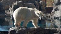 UNM to celebrate staff at Rio Grande Zoo