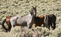 Wild Mustangs focus of summer field course