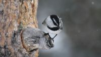 UNM researchers uncover multiple adaptations to temperature in birds and mammals