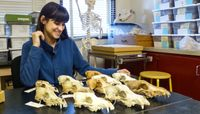 Anthropology students awarded NSF Graduate Fellowships