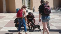 'Cuddle a Canine' back at Zimmerman Library