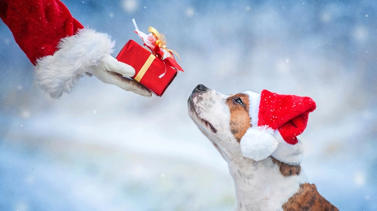 Happy Tails for the holidays - The University of New Mexico - UNM 2017-11-13 17:00