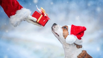 Happy Tails for the holidays