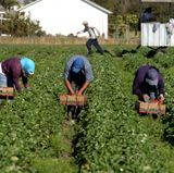 UNM to honor agricultural industry