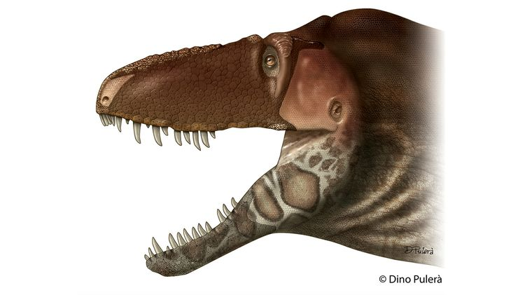 New species of tyrannosaur dinosaur