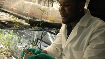 National Science Foundation extends N.M. Alliance for Minority Participation grant