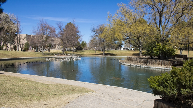 West side of Duck Pond after cleaning