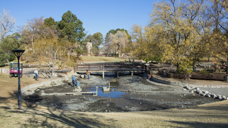 East side of Duck Pond before cleaning