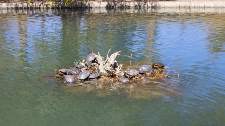 Pond wildlife