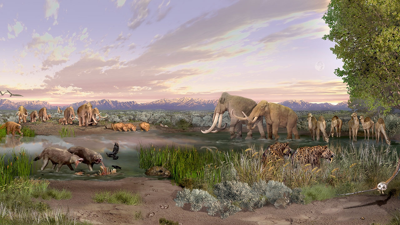 UNM researcher explores influence of ancient humans on mammal body size