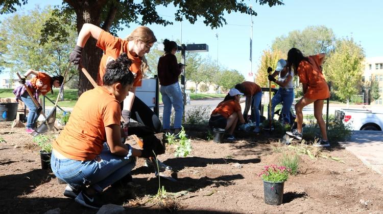 Planting shrubs around campus
