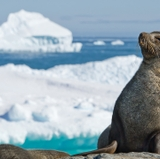 UNM researchers find warm-blooded marine mammals thrive in Polar Regions