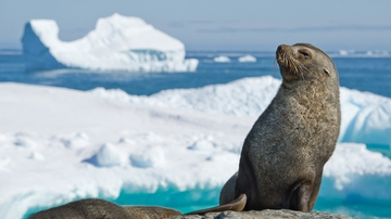 UNM researchers find warm-blooded marine mammals thrive in Polar Regions