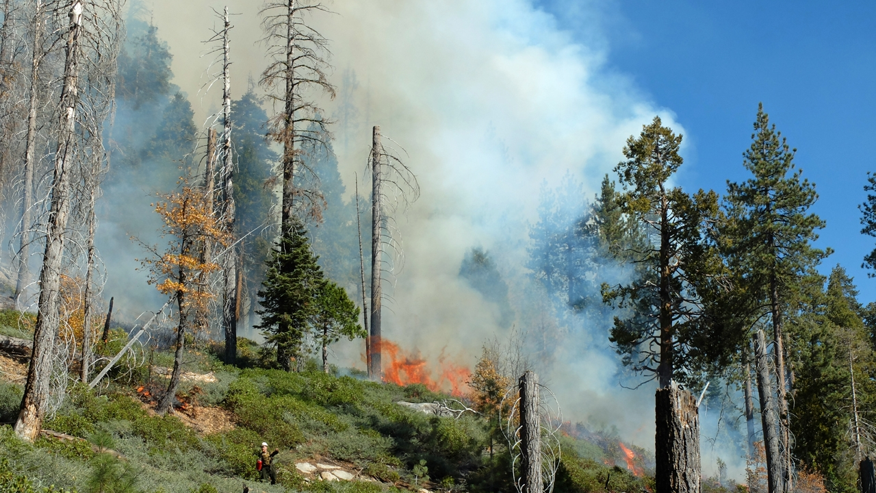 Scientists simulate forest and fire dynamics to understand area burn of future wildfires