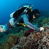 UNM scientist studies coral reefs in South Pacific