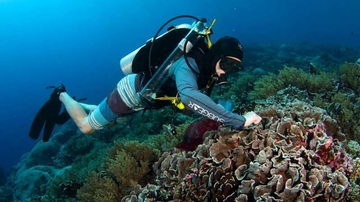 UNM scientist studies coral reefs in South Pacific