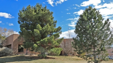 UNM celebrates New Mexico Arbor Day
