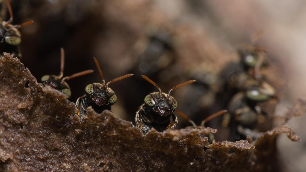 Ants - Terrestrial Tracker