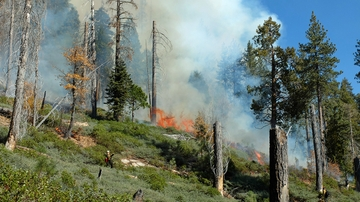 UNM scientists work to mitigate fire danger in Santa Fe Watershed