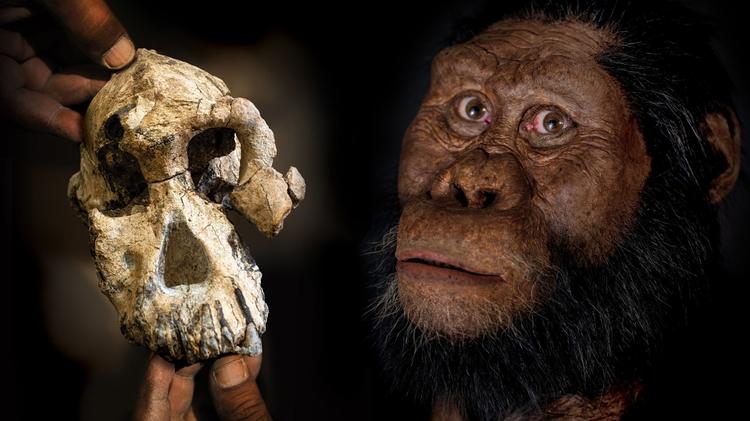 Bones, stones, and evolution