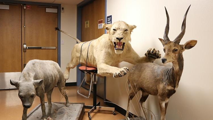 Large mammals on display