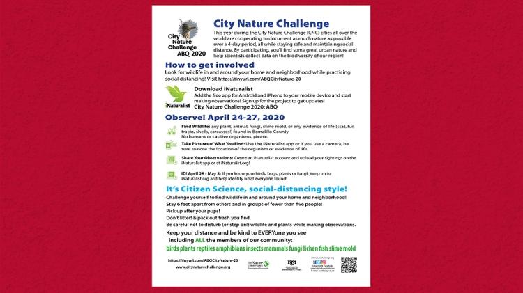 Urban wildlife challenge