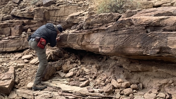 Geologists refine the timing of the Cambrian explosion and trilobite evolution in Grand Canyon