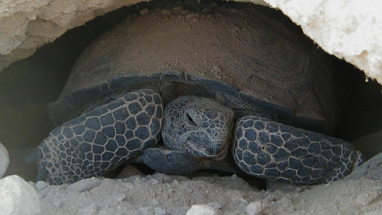 Researchers examine tortoises