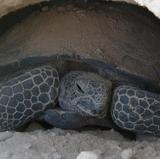 UNM, LANL to study radioactive elements in tortoises