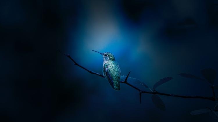 UNM professors examine how hummingbirds live in extreme climate