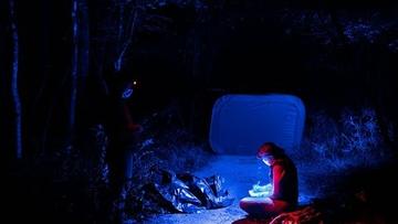 Research illuminates the language of fireflies