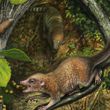 UNM researchers: Scientists describe earliest primate fossils