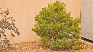 New Mexico Arbor Day tree planting