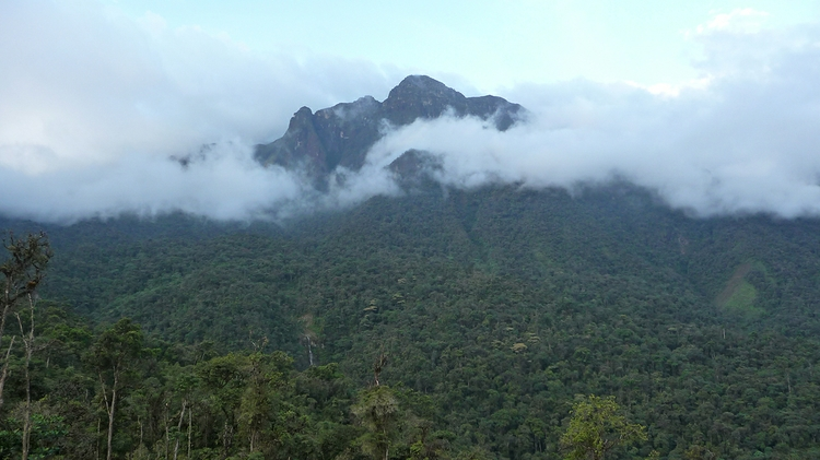 The montane forests of
