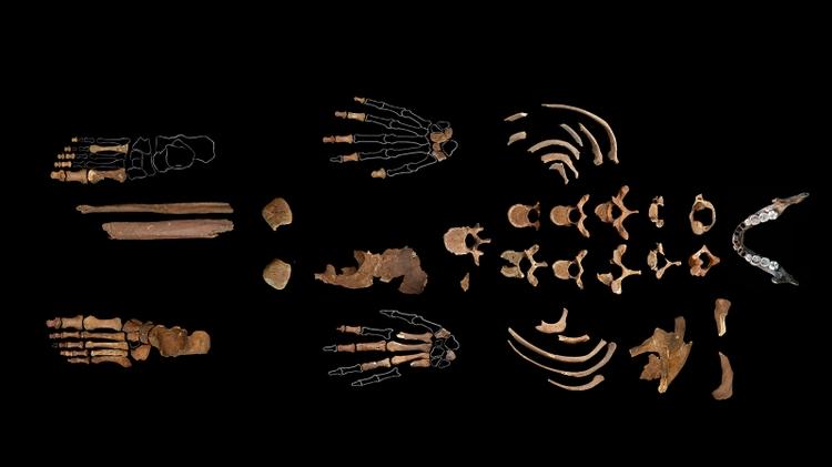 Red Lady's skeleton