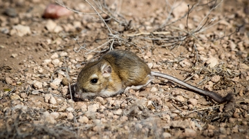 Scientists study how regional climate variability affects animals in North American drylands