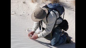 UNM team finds new species of moth