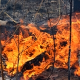 Fire and forest scientists write letter voicing concerns over new U.S. Forest Service directives