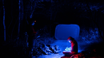 Research illuminates the language of fireflies (Extended Version)