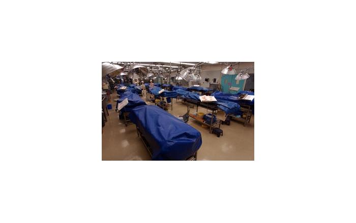 The human anatomy lab