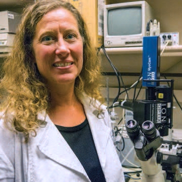 UNM researcher explores how sleep apnea drives high blood pressure