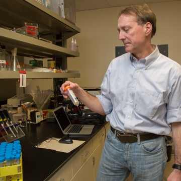 UNM researchers target Zika-spreading mosquito with lemongrass oil