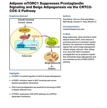 Adipose mTORC1 Suppresses Prostaglandin Signaling and Beige Adipogenesis via the CRTC2-COX-2 Pathway | Cell Reports