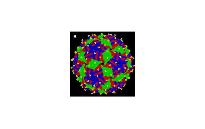 Virus-Like Particle (VLP)