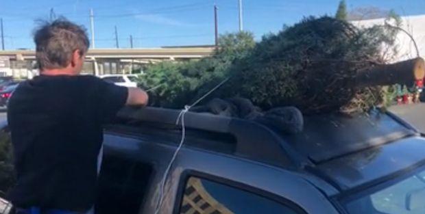 Christmas Tree Hauling Safety