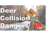AAA Texas Reminds Drivers About the Dangers of Deer Collisions During Fall