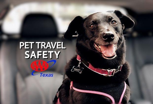 PET TRAVEL SAFETY THUMBNAIL