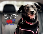 AAA Texas Reminds Pet Owners to Focus on Safety as Travel Bookings Surge